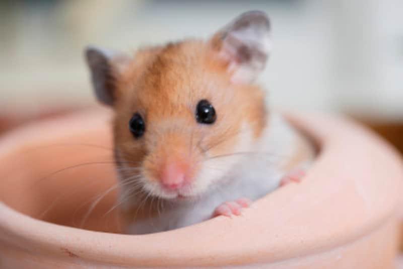 何かと役立つ、鼠に関することわざや慣用句