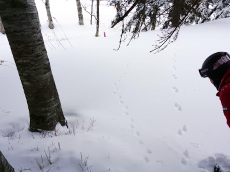 雪上バギーツアー