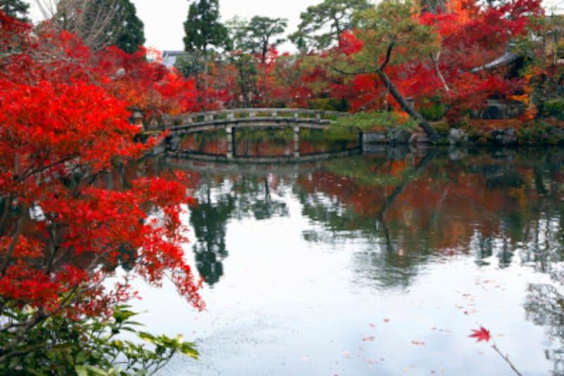 京都のおすすめ紅葉スポット情報永観堂名所ライトアップ禅林寺