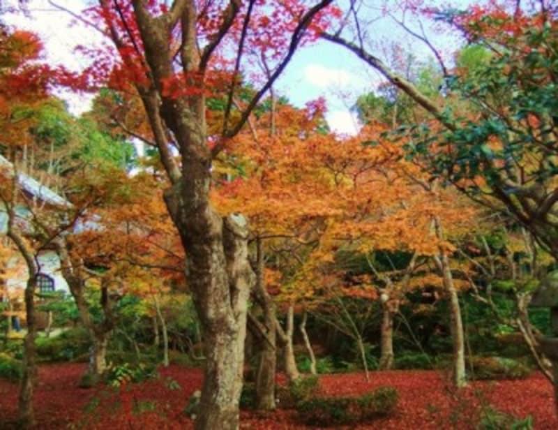 京都のおすすめ紅葉スポット情報圓光寺名所