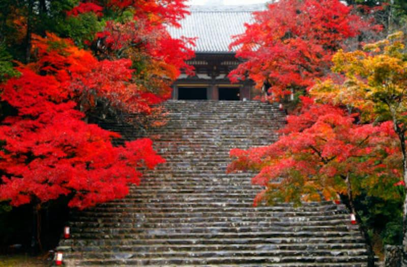 京都のおすすめ紅葉スポット情報神護寺名所