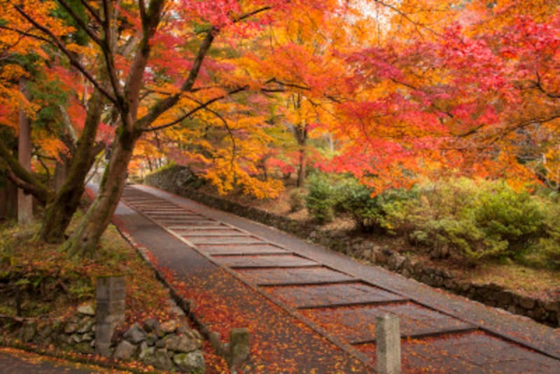 京都のおすすめ紅葉スポット情報毘沙門名所