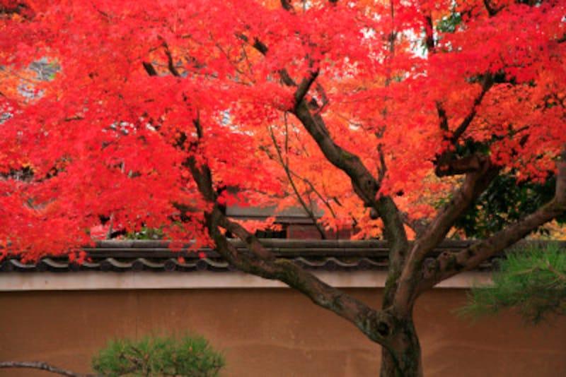京都のおすすめ紅葉スポット情報東福寺絶景名所