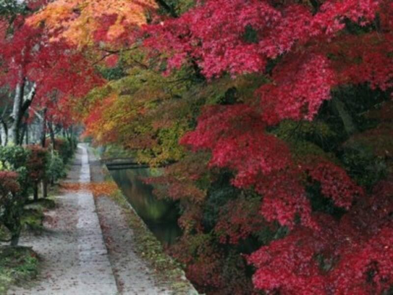 京都のおすすめ紅葉スポット情報哲学の道ライトアップ名所