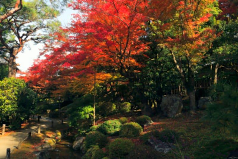 京都のおすすめ紅葉スポット情報青蓮院門跡名所ライトアップ