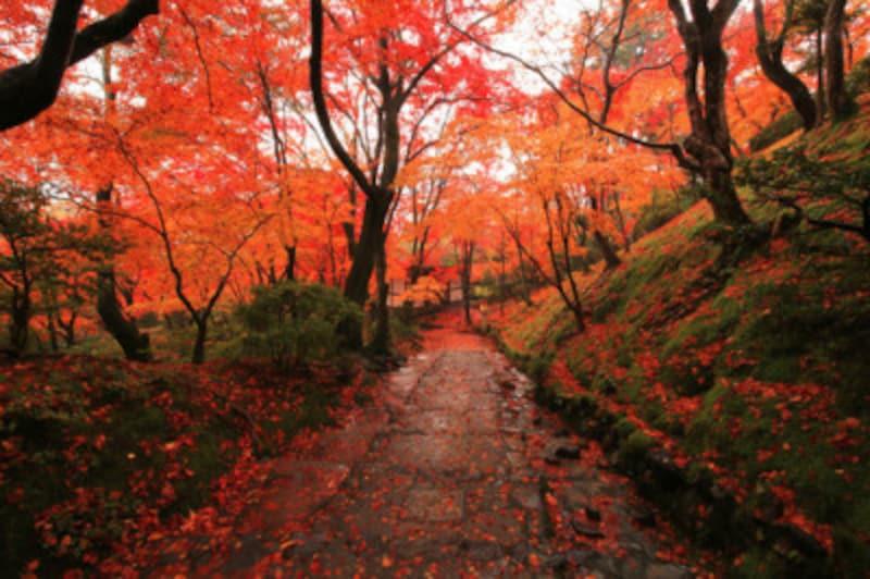 京都のおすすめ紅葉スポット情報常寂光寺名所