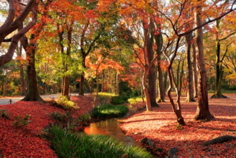 京都のおすすめ紅葉スポット情報下鴨神社パワースポット名所人気