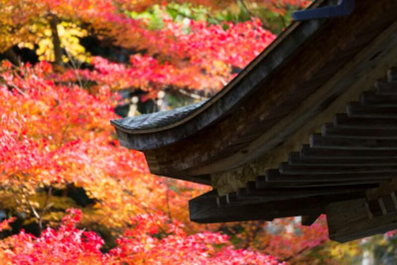 京都のおすすめ紅葉スポット情報三千院名所