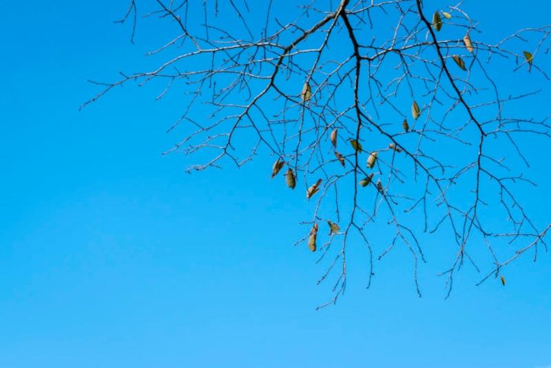 初冬の穏やかで暖かい気候を春に例えて「小春日和」と呼びます