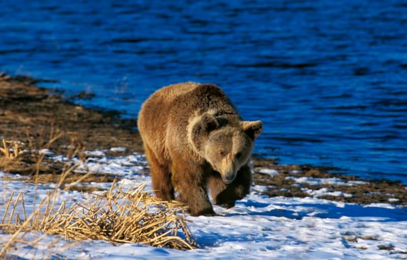 熊たちは冬ごもりの時期を迎えます