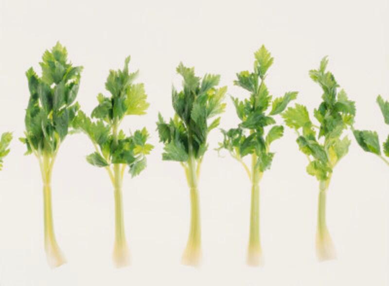 セロリの栄養素と効能……おすすめの食べ方や保存法など