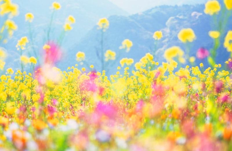 二十四節気のひとつ「清明」は、春の季語になっています
