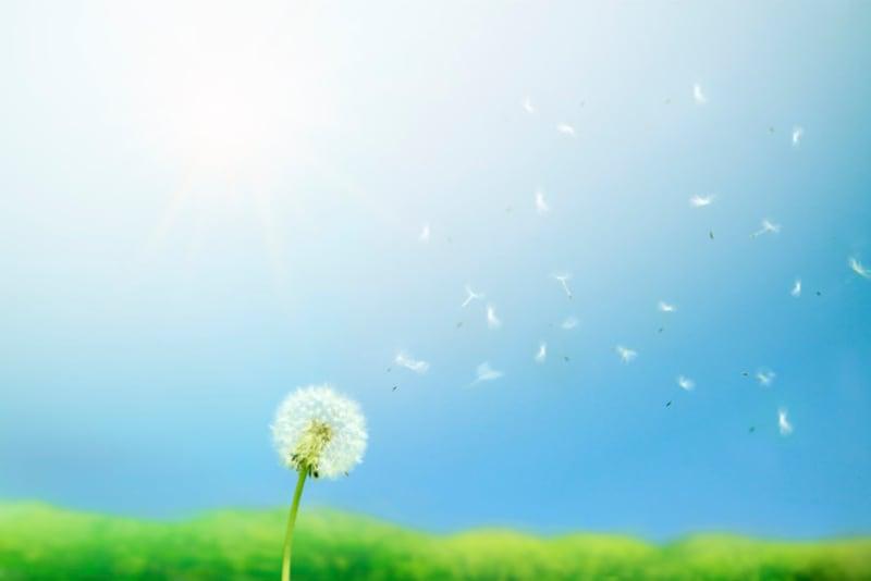 清明風は春一番とは異なり穏やかな春風です