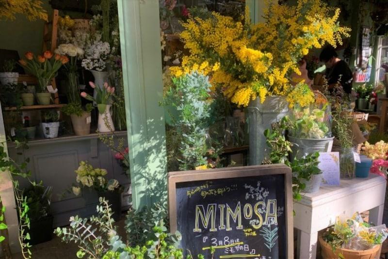 日本の花屋の店先でも、存在感のあるミモザ。「ミモザの日」も注目されています