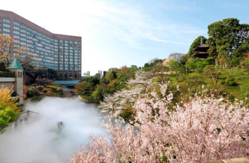 2021年の東京の桜の開花はかなり早め、3月17日あたりとのこと(画像:ホテル椿山荘東京)
