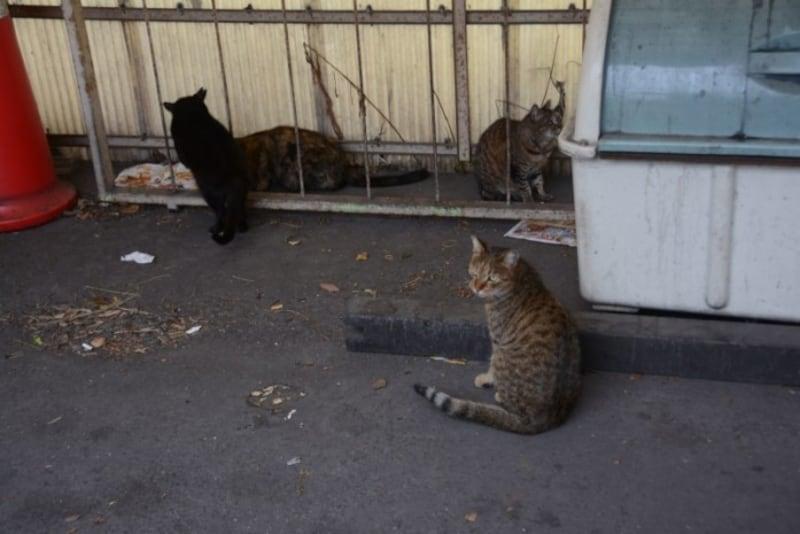 扇町駅で出会ったネコ達