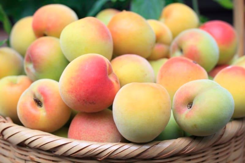 梅の実は熟すにつれ黄みをおびてきます