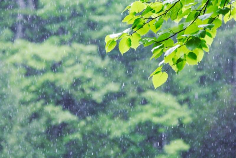 いよいよ梅雨の時期を迎えます