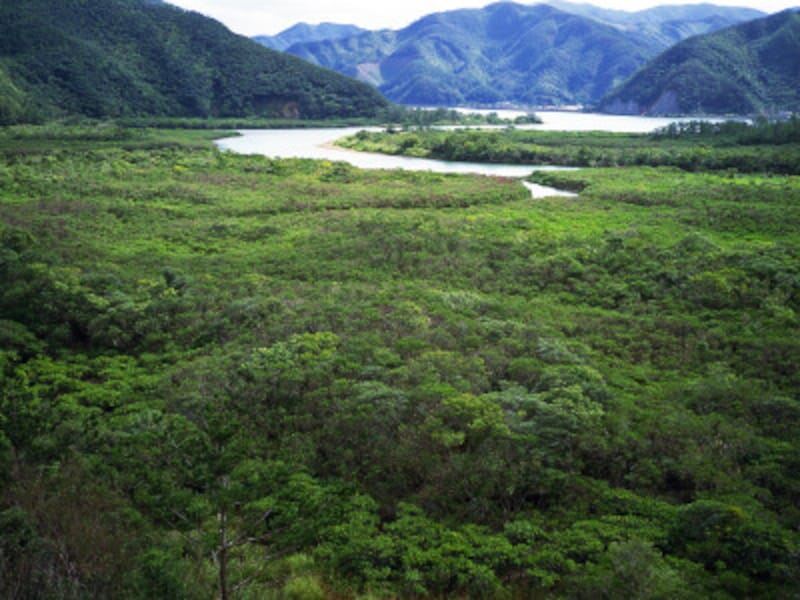 奄美大島の常緑広葉樹林