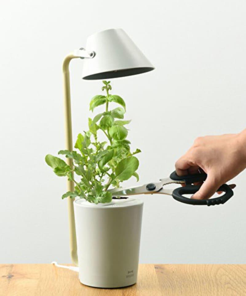 BRUNO「水耕栽培キットSTANDBYGREEN」7150円。LED単体でデスクライトとしても使えます