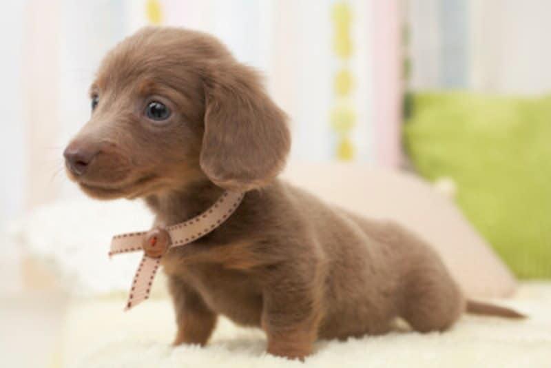 犬,家族,覚悟,愛犬,