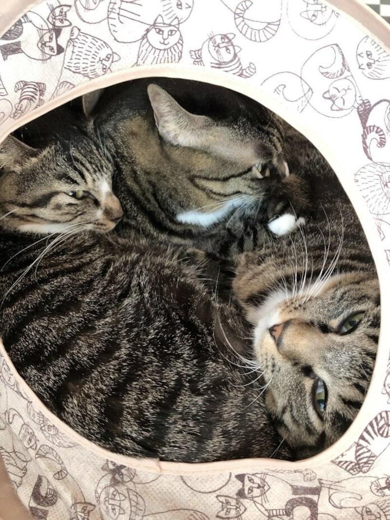 猫の液体化002