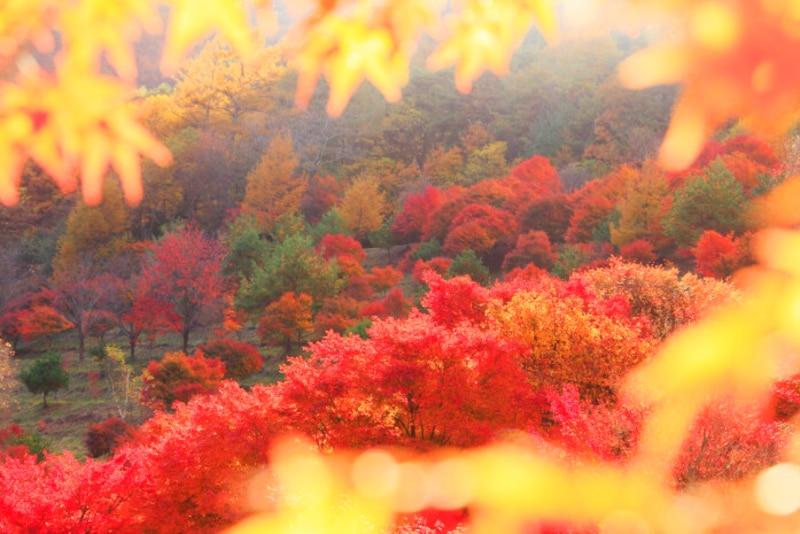 時候の挨拶とは「拝啓」などに続く書き出しの言葉で、季節感をあらわします