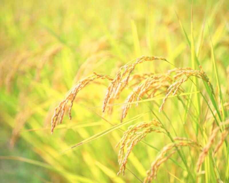秋風が吹き渡る季節を表す「金風の候」。「○○の候」は「○○の折」「○○のみぎり」に置き換えて使うこともできます