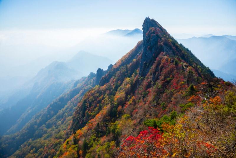 紅葉前線は北から南へ、高度の高い山頂から低いふもとへと進みます