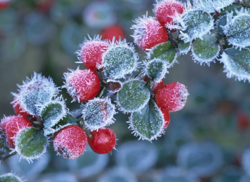 「霜降(そうこう)」とは、霜が降りる頃という意味