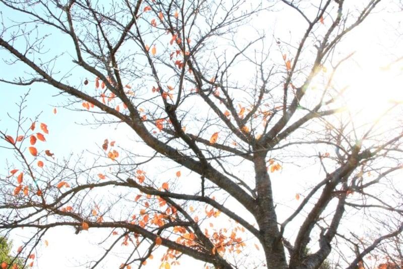 「木枯らし」と「小春日和」は晩秋から初冬にかけて使われる