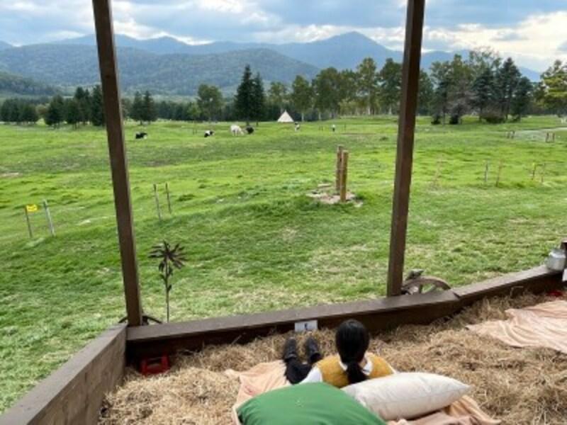 巨大牧草ベッド。牛を近くに感じながらのんびり
