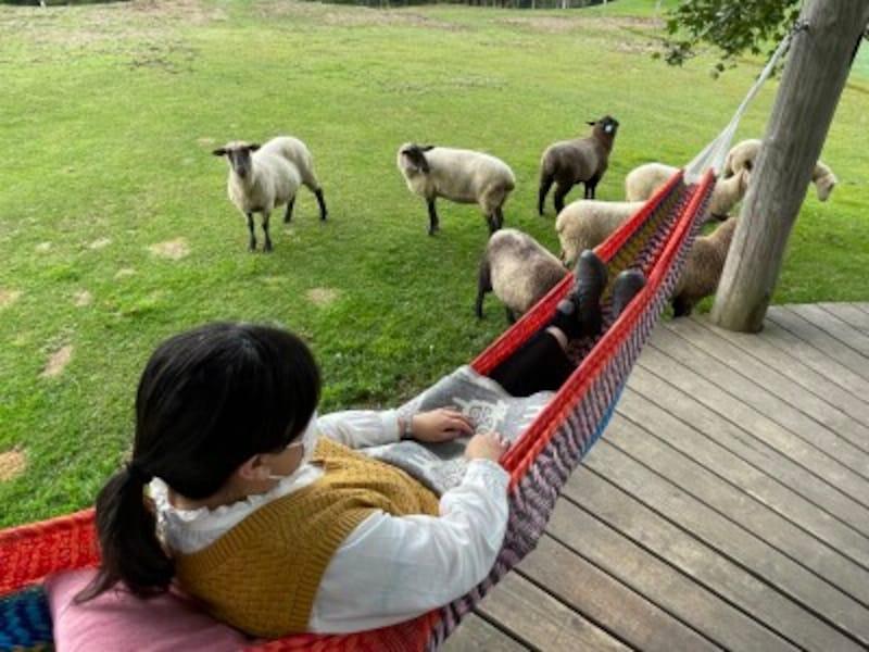 羊とお昼寝ハンモック。メーメー鳴かれて、お昼寝どころではありません!