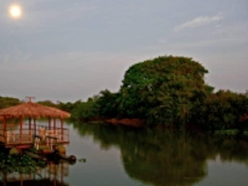パンタナールとはポルトガル語で「大湿地」。雨季の域内は川や湖、池、湿地がほとんどで、それ以外は草原が多い