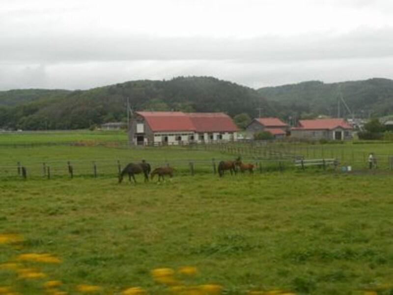 車窓から牧場が見える