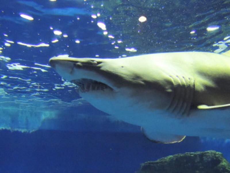 しながわ水族館
