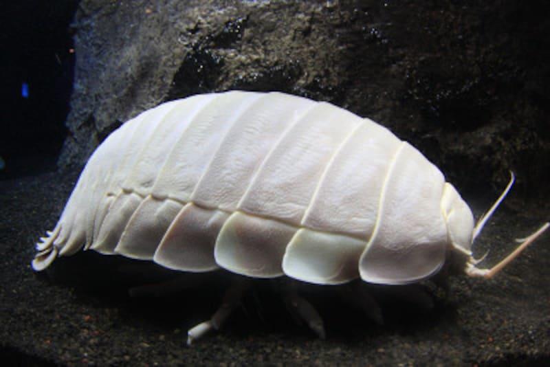 沼津深海水族館シーラカンス・ミュージアム