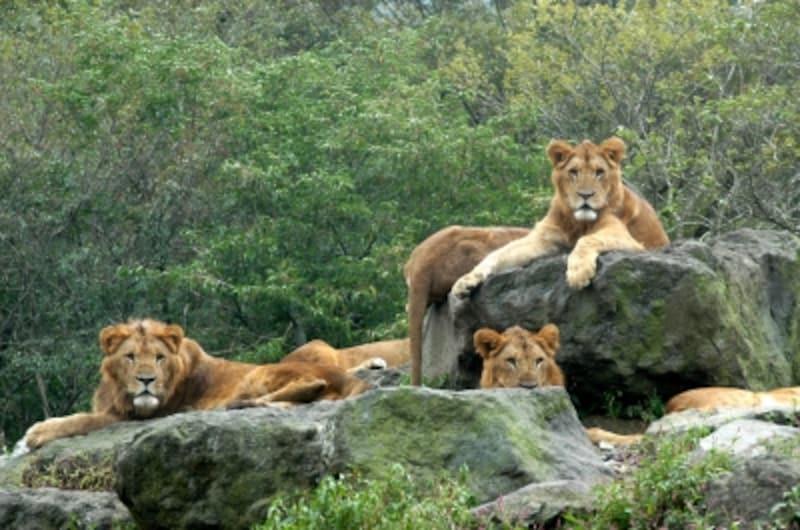 動物を間近に見ることができるサファリパーク