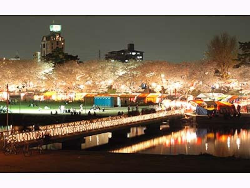 岡崎公園の南側から北側を望む