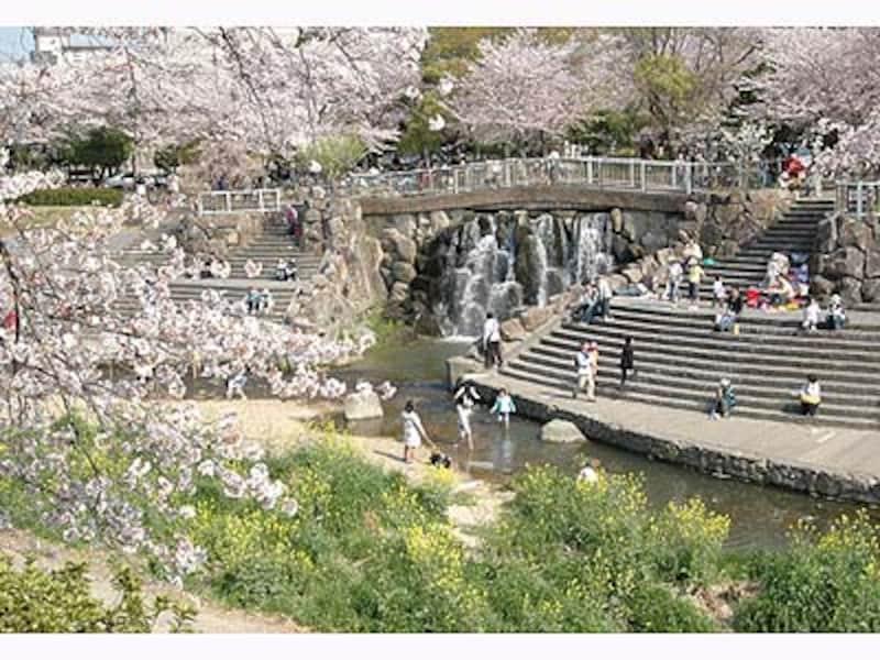 名古屋の桜・山崎川瑞穂橋