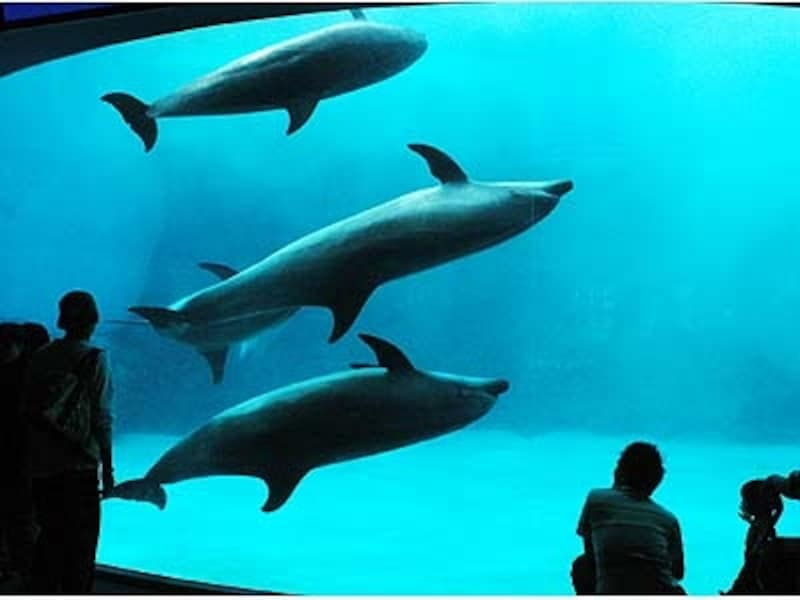 入口を入ってすぐスケール満点のイルカの水槽が