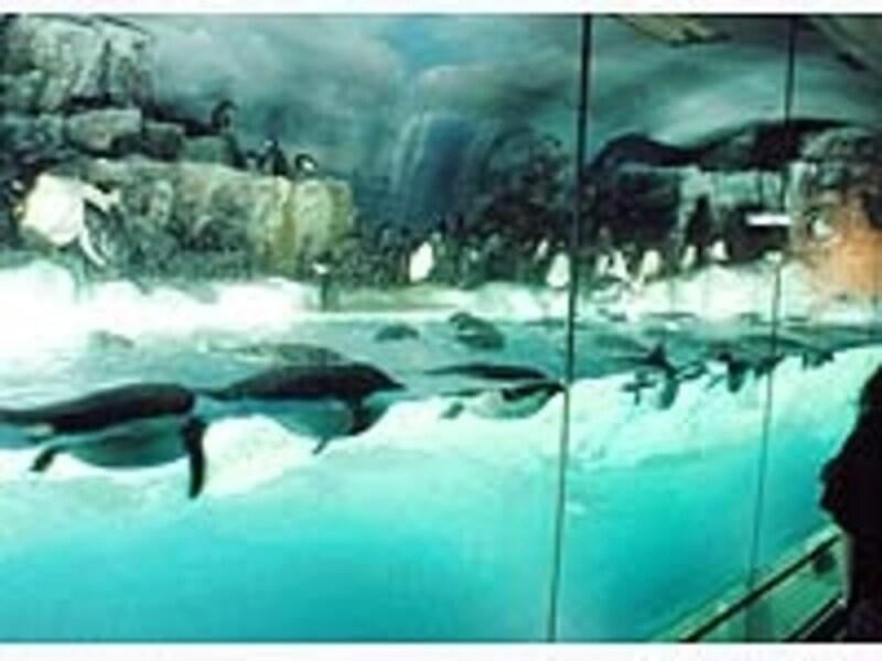 南館の目玉、ペンギン水槽