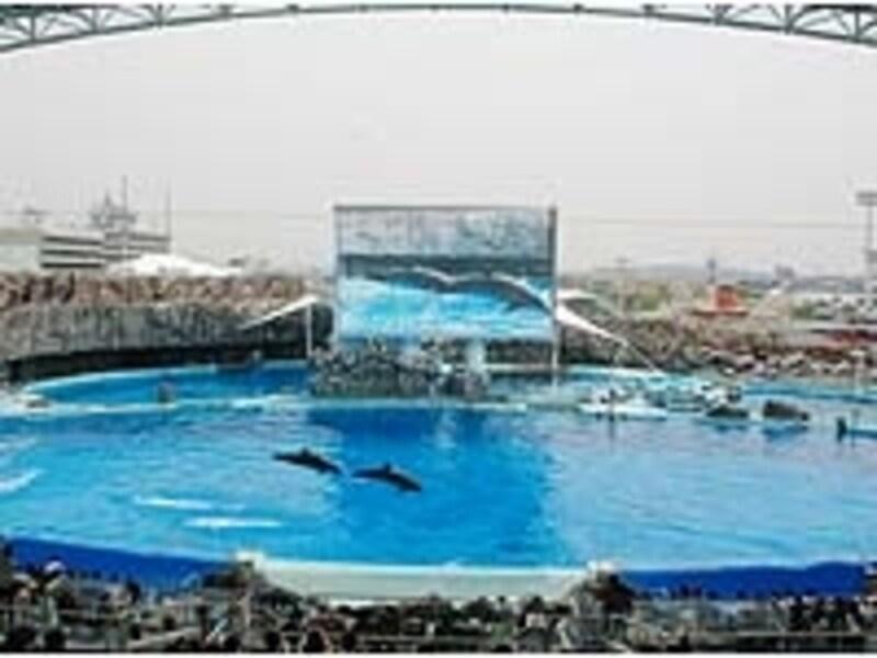 巨大なプールには超大型スクリーンもあり、水上と水中からイルカたちの泳ぐ姿を観られる