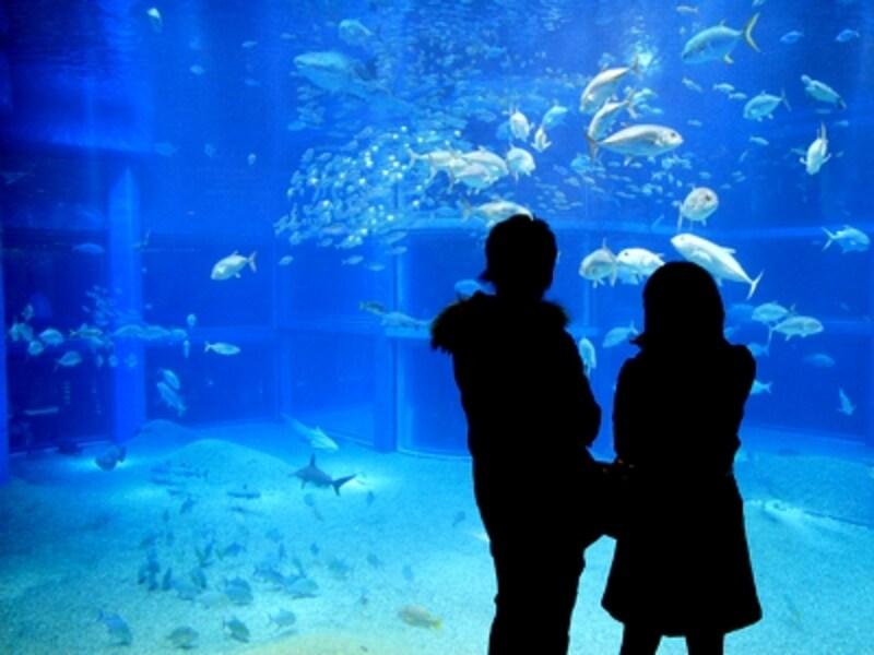 海遊館・太平洋水槽
