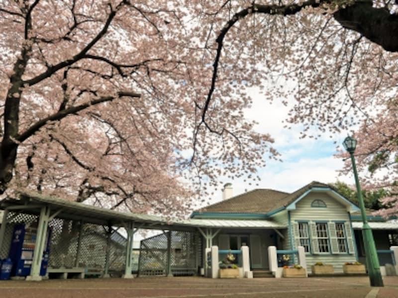 山手公園は穴場のお花見スポット。建物は公園管理センターとなっている歴史的建造物の「山手68番館」(2017年4月7日撮影)