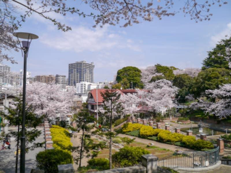 緑豊かな元町公園。春はサクラが咲き誇ります(2014年4月1日撮影)