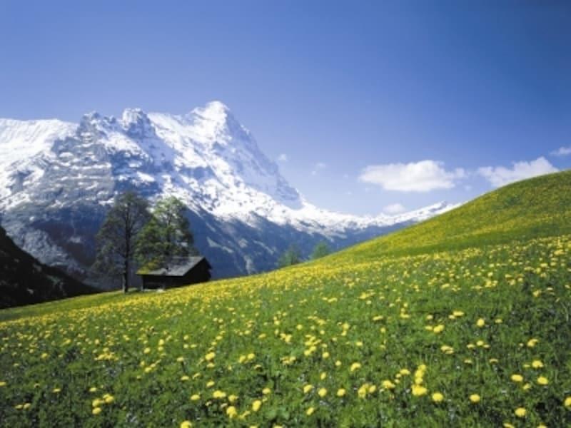 花に彩られた初夏の牧草地と名峰アイガー