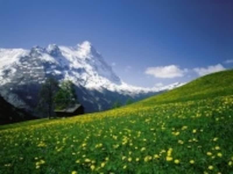 グリンデルワルト付近の牧草と名峰アイガー