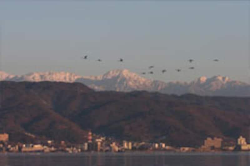 八ヶ岳連峰と飛翔する白鳥の群れ