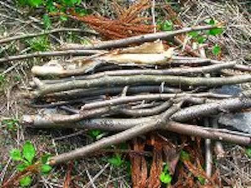 枝を並べる